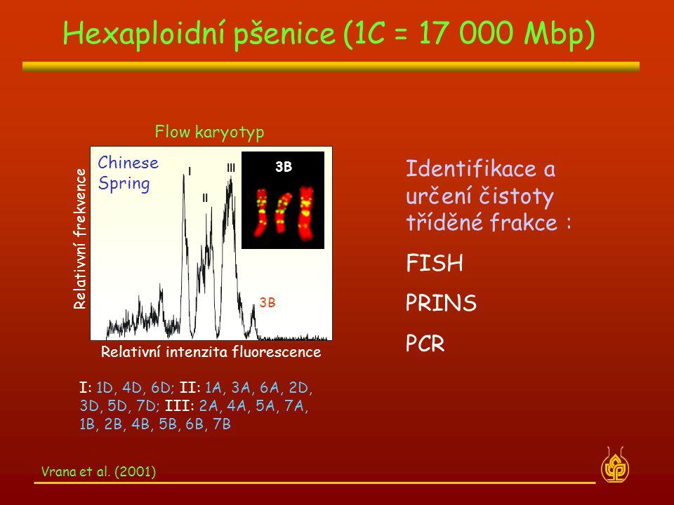 Hexaploidní pšenice (1C = 17 000 Mbp)