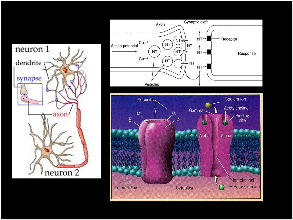 Toxikologie nikotinu Mechanismy účinku