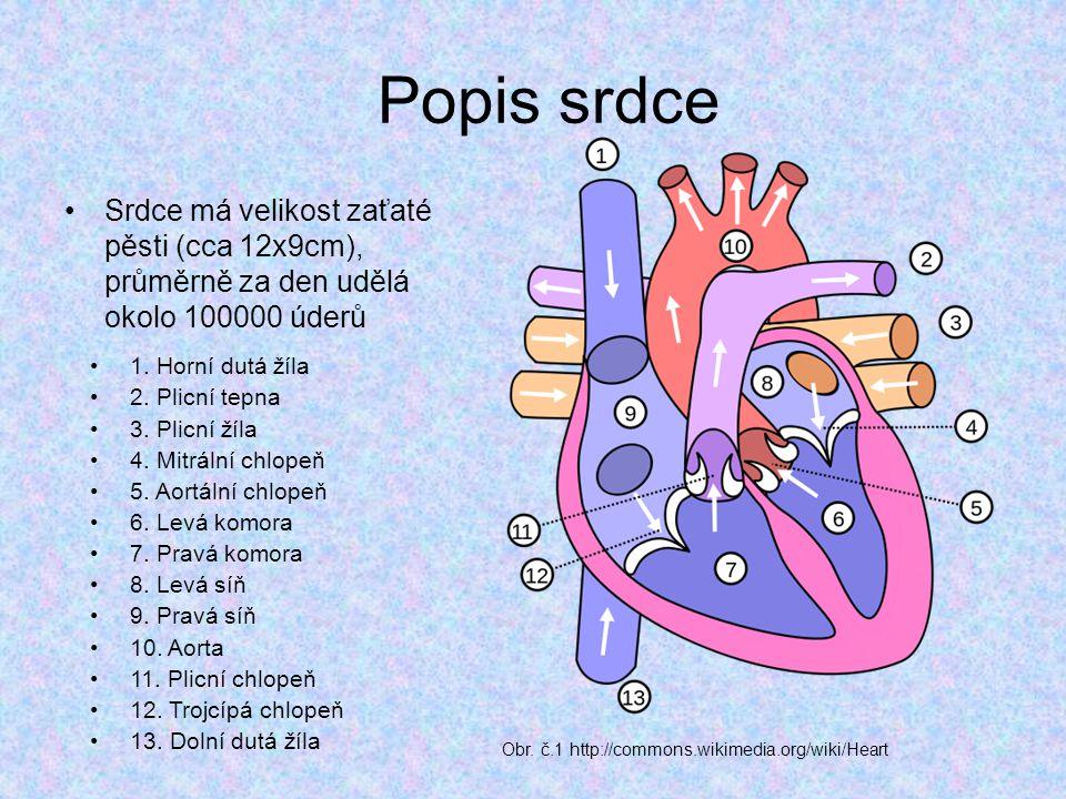 Popis srdce Srdce má velikost zaťaté pěsti (cca 12x9cm), průměrně za den udělá okolo 100000 úderů. 1. Horní dutá žíla.