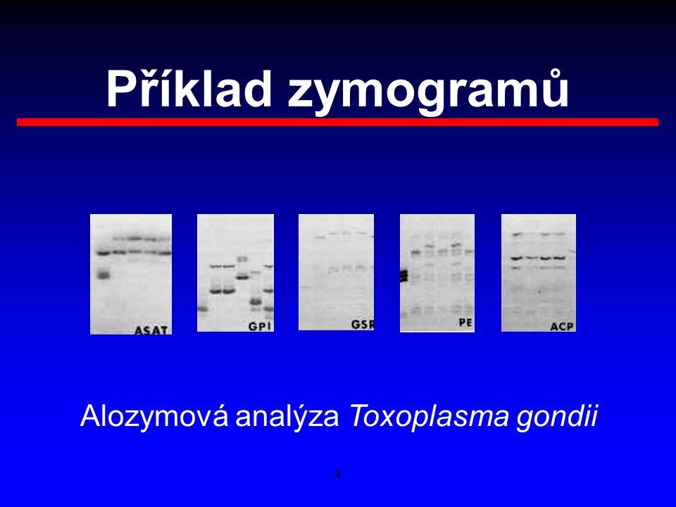 Příklad zymogramů Alozymová analýza Toxoplasma gondii 4