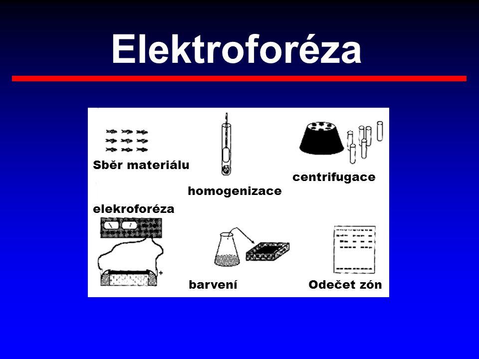 Elektroforéza Sběr materiálu centrifugace homogenizace elekroforéza