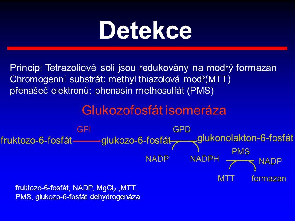 Detekce Glukozofosfát isomeráza