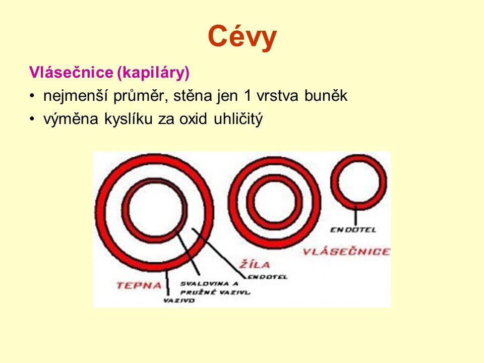 Cévy Vlásečnice (kapiláry) nejmenší průměr, stěna jen 1 vrstva buněk