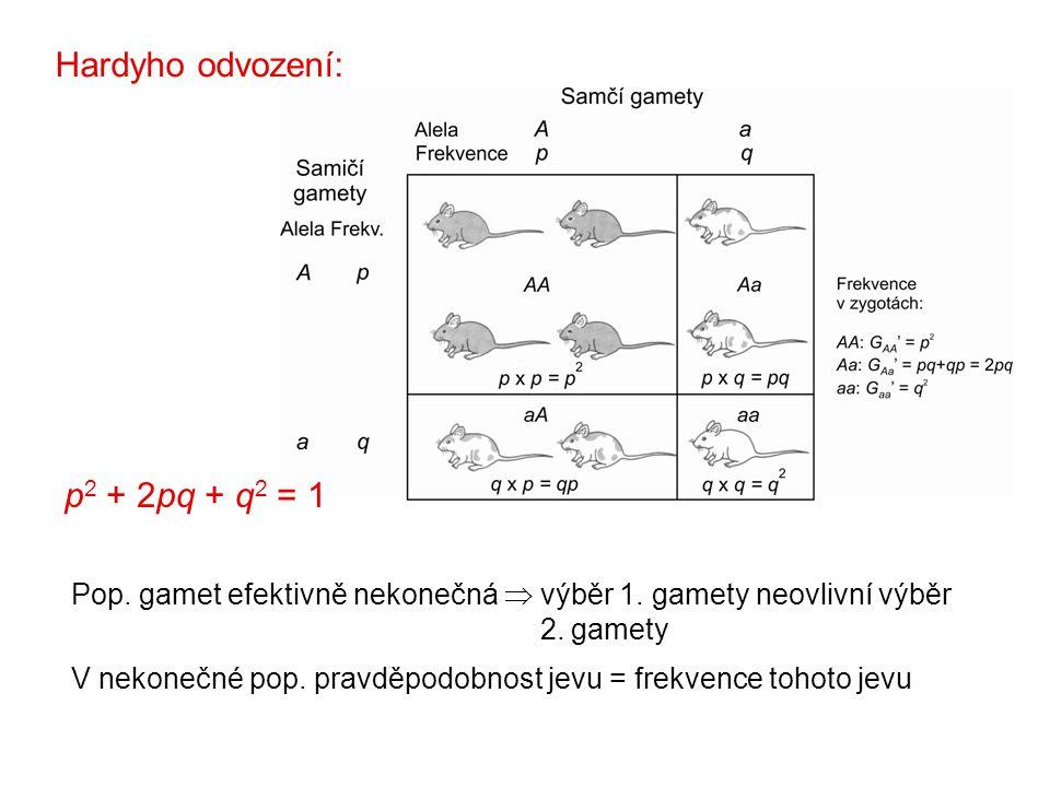 Hardyho odvození: p2 + 2pq + q2 = 1