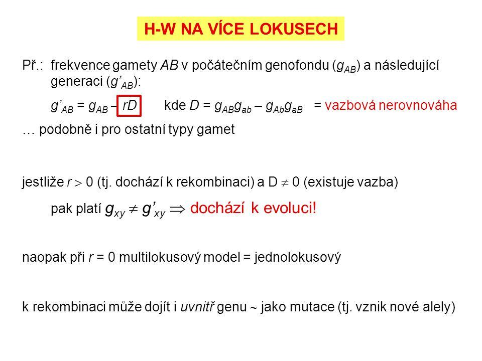 H-W NA VÍCE LOKUSECH Př.: frekvence gamety AB v počátečním genofondu (gAB) a následující generaci (g'AB):