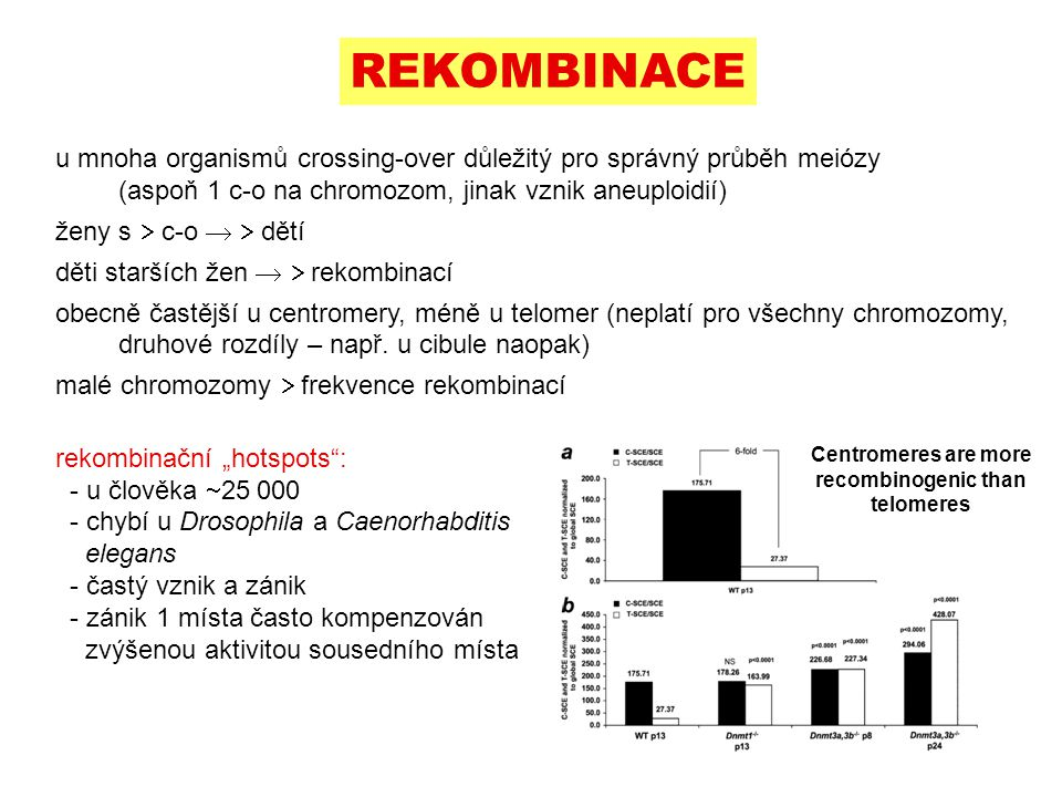 Centromeres are more recombinogenic than telomeres