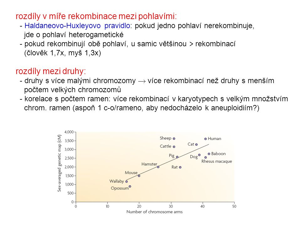 rozdíly v míře rekombinace mezi pohlavími: - Haldaneovo-Huxleyovo pravidlo: pokud jedno pohlaví nerekombinuje, jde o pohlaví heterogametické - pokud rekombinují obě pohlaví, u samic většinou  rekombinací (člověk 1,7x, myš 1,3x)