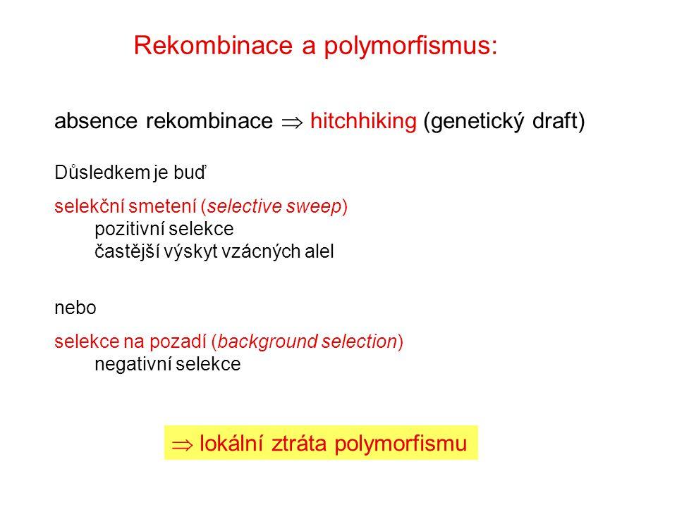 Rekombinace a polymorfismus: