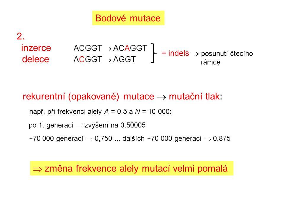 rekurentní (opakované) mutace  mutační tlak: