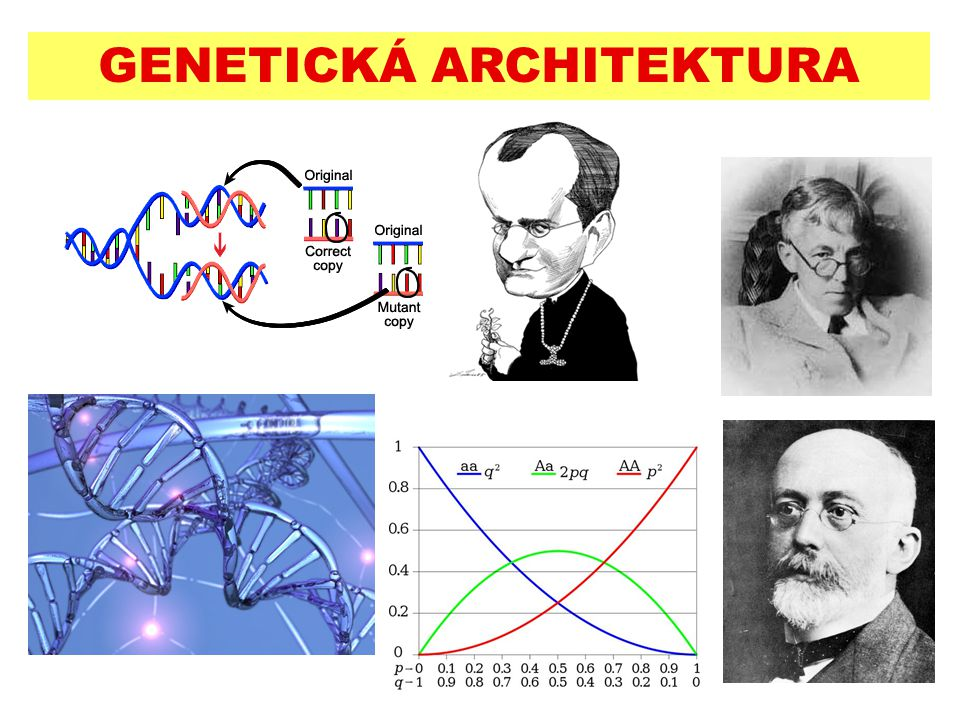 GENETICKÁ ARCHITEKTURA