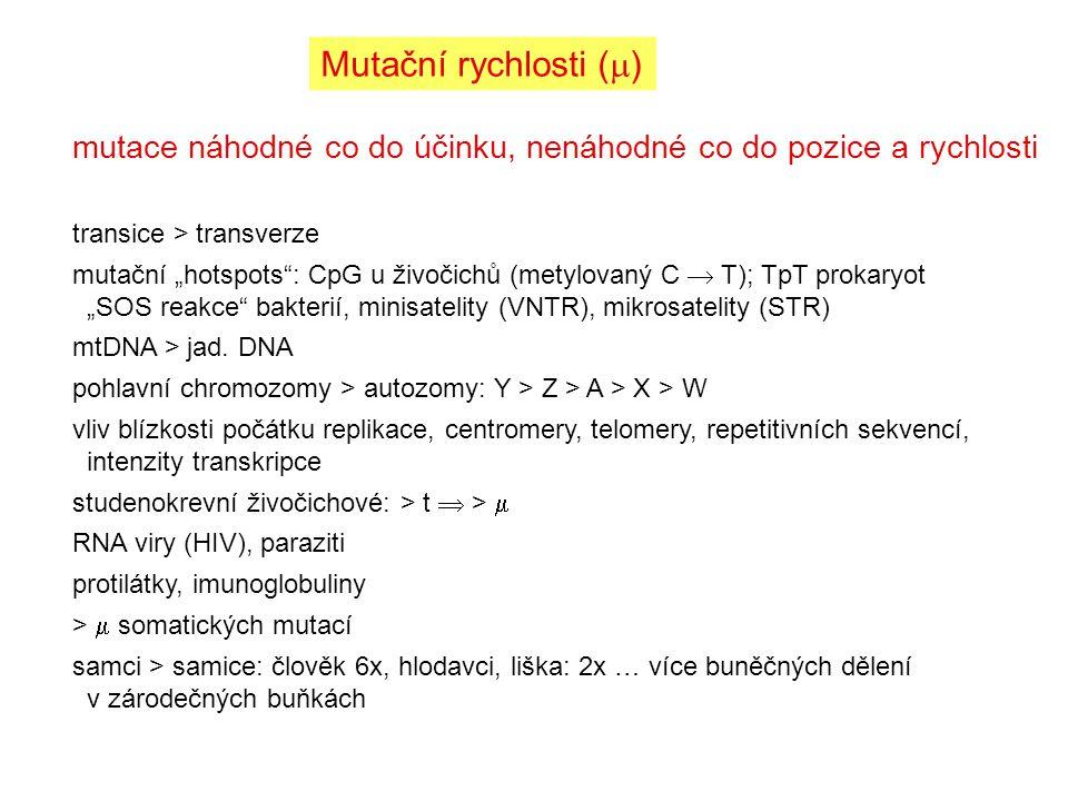 Mutační rychlosti () mutace náhodné co do účinku, nenáhodné co do pozice a rychlosti. transice > transverze.