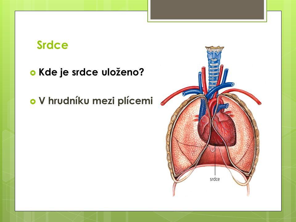 Srdce Kde je srdce uloženo V hrudníku mezi plícemi