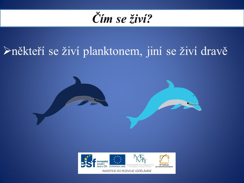 Čím se živí někteří se živí planktonem, jiní se živí dravě