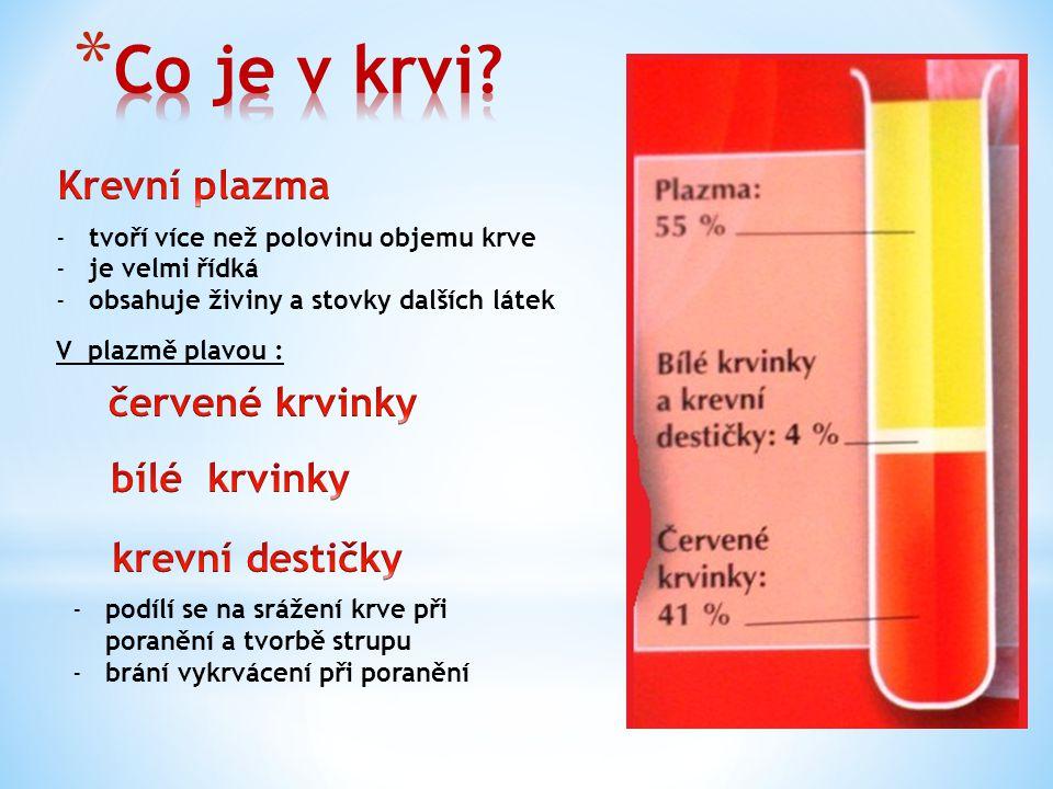 Co je v krvi Krevní plazma červené krvinky bílé krvinky