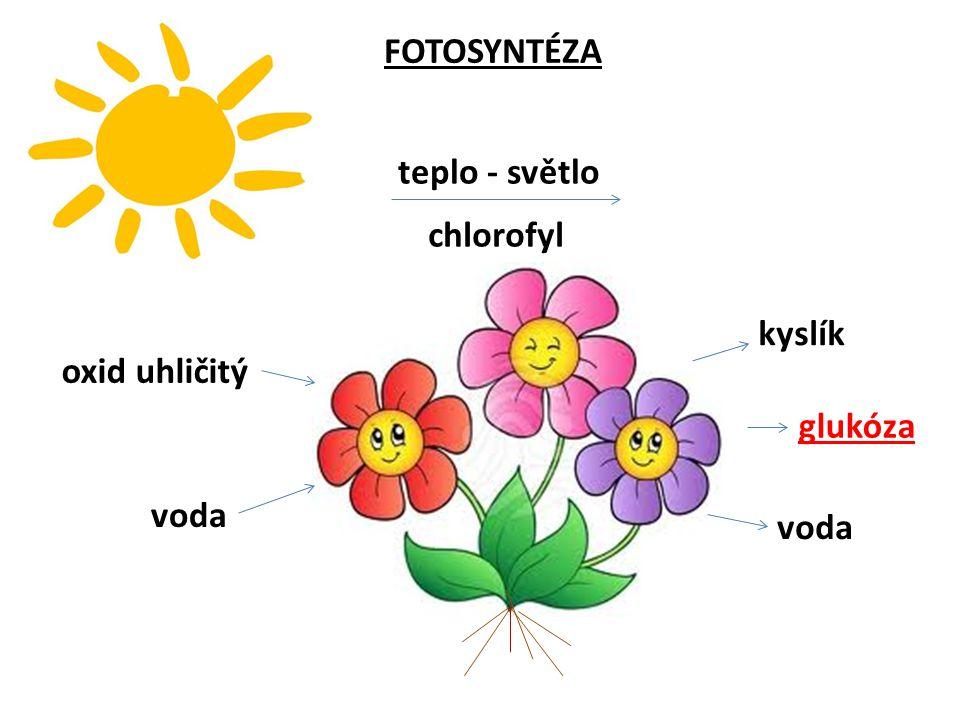 FOTOSYNTÉZA teplo - světlo chlorofyl kyslík oxid uhličitý glukóza voda voda