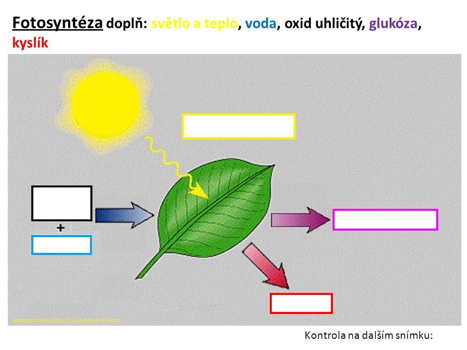 Fotosyntéza doplň: světlo a teplo, voda, oxid uhličitý, glukóza, kyslík