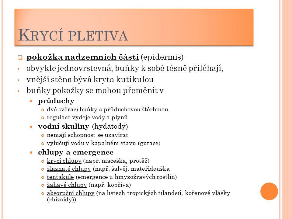 Krycí pletiva pokožka nadzemních částí (epidermis)