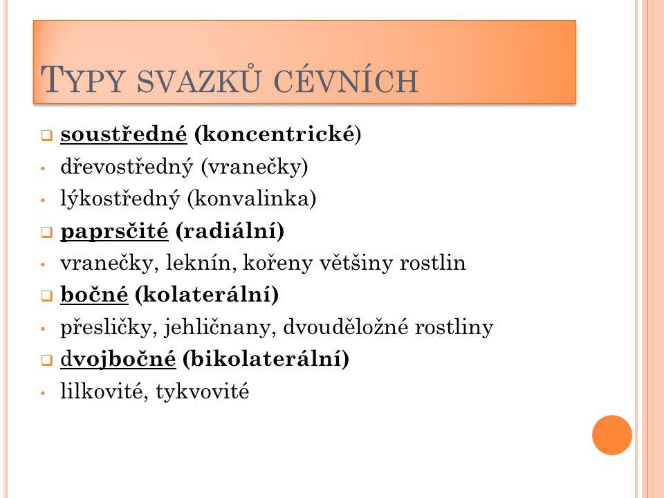 Typy svazků cévních soustředné (koncentrické) dřevostředný (vranečky)