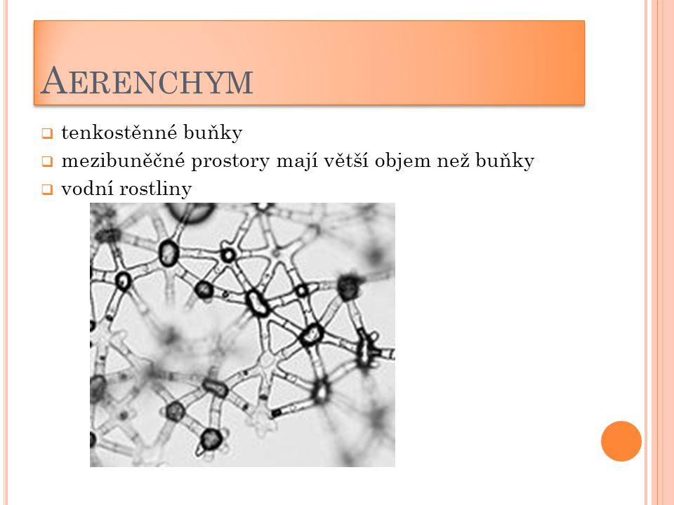 Aerenchym tenkostěnné buňky