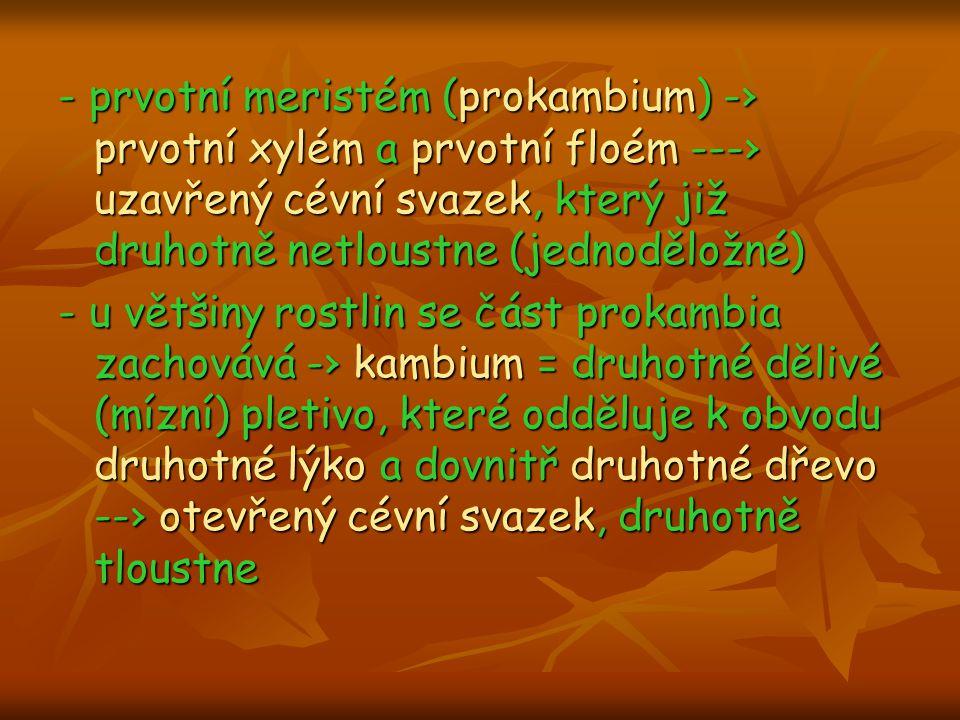 - prvotní meristém (prokambium) -› prvotní xylém a prvotní floém ---› uzavřený cévní svazek, který již druhotně netloustne (jednoděložné)