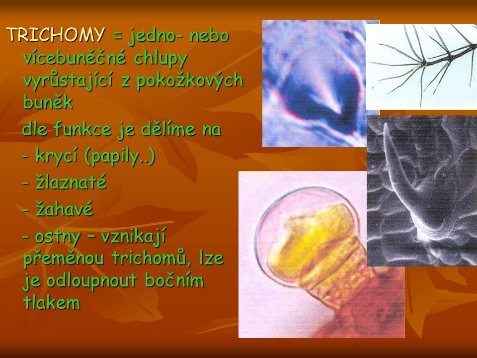 TRICHOMY = jedno- nebo vícebuněčné chlupy vyrůstající z pokožkových buněk