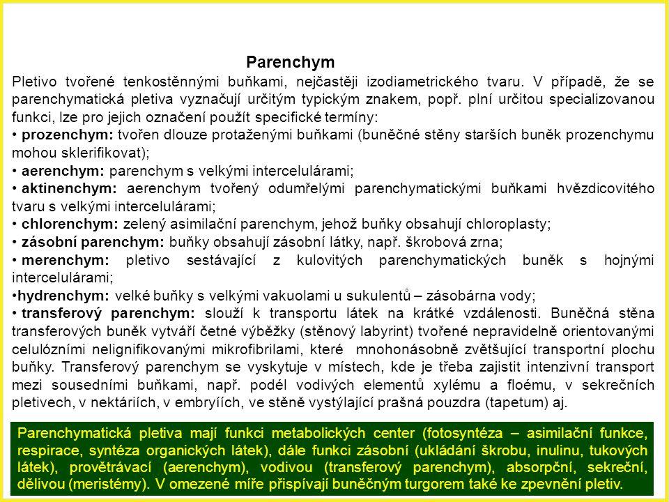 Parenchym