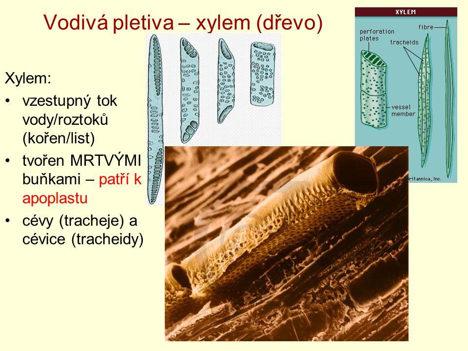 Vodivá pletiva – xylem (dřevo)