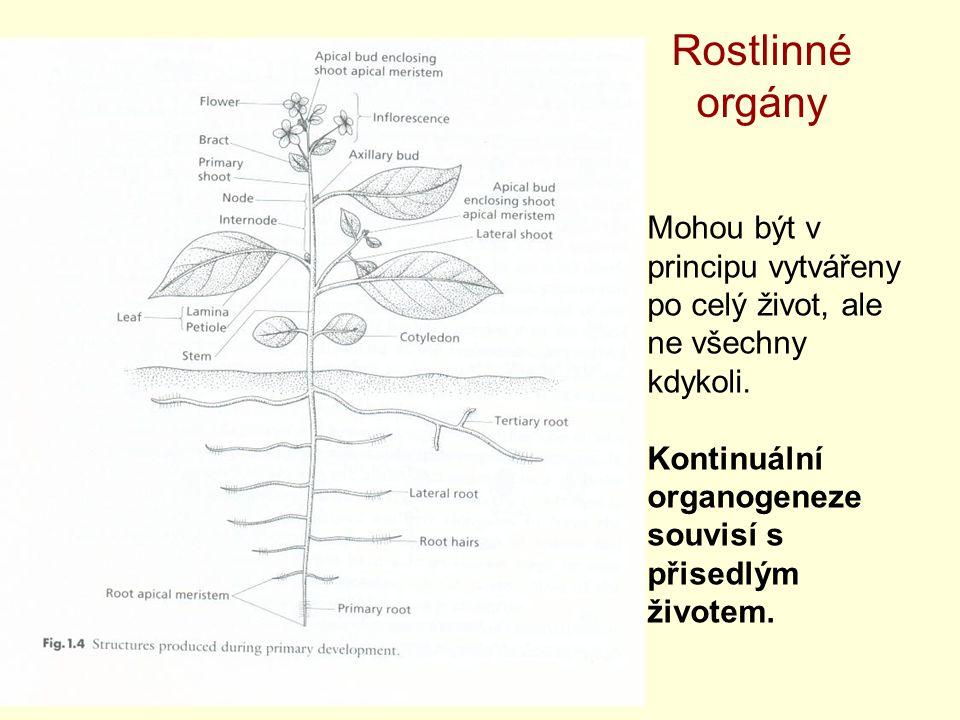 Rostlinné orgány Mohou být v principu vytvářeny po celý život, ale ne všechny kdykoli.