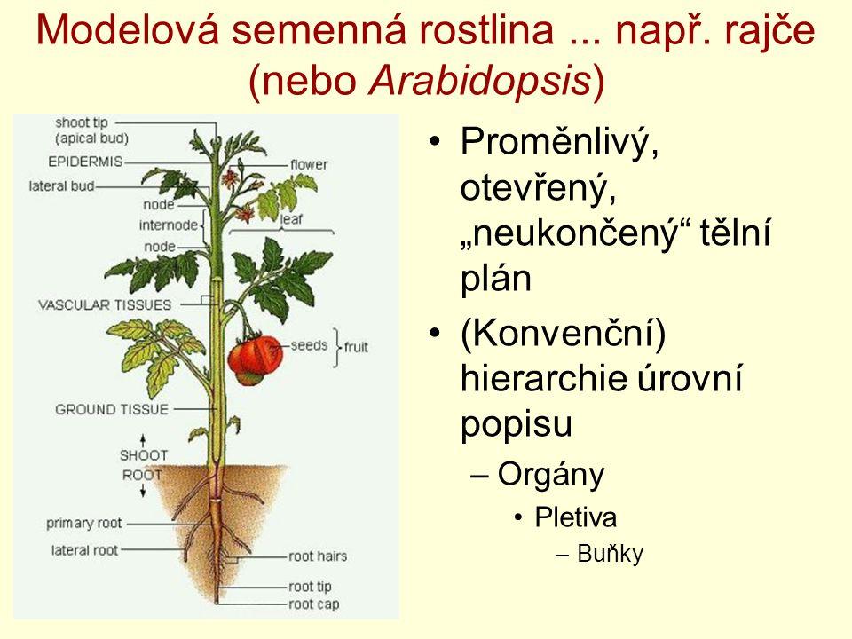 Modelová semenná rostlina ... např. rajče (nebo Arabidopsis)