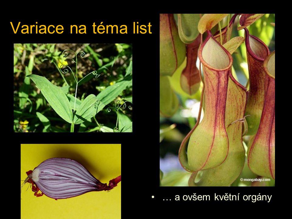 Variace na téma list … a ovšem květní orgány láčkovka Nepenthes