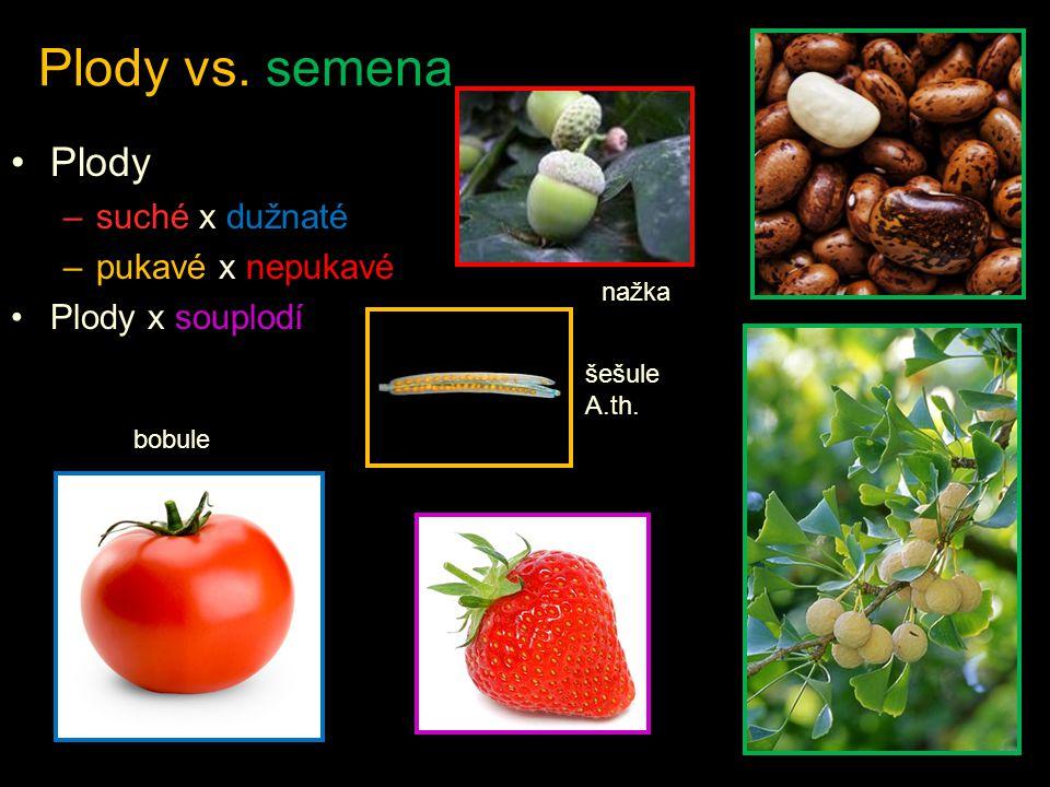 Plody vs. semena Plody suché x dužnaté pukavé x nepukavé
