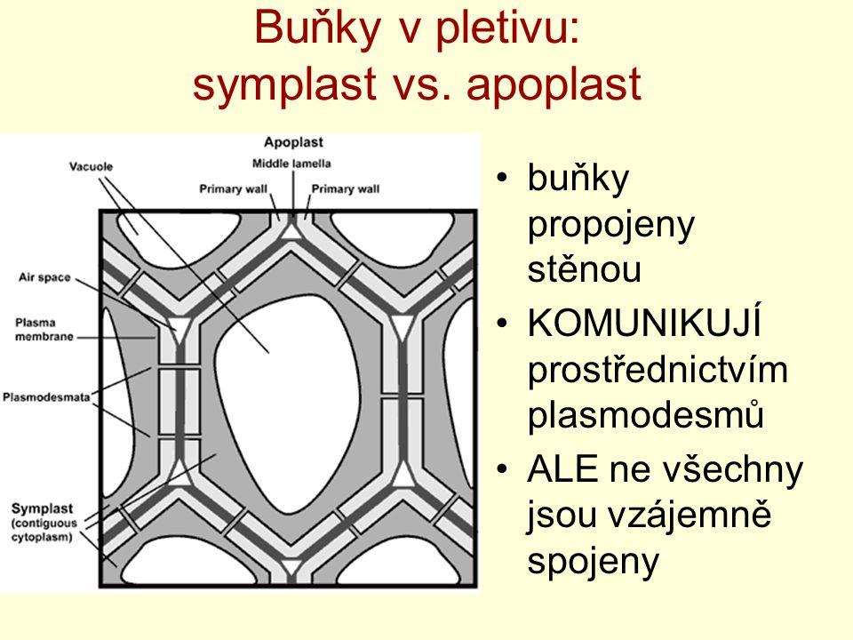 Buňky v pletivu: symplast vs. apoplast