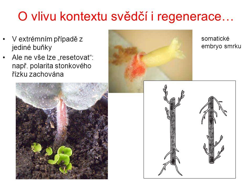 O vlivu kontextu svědčí i regenerace…
