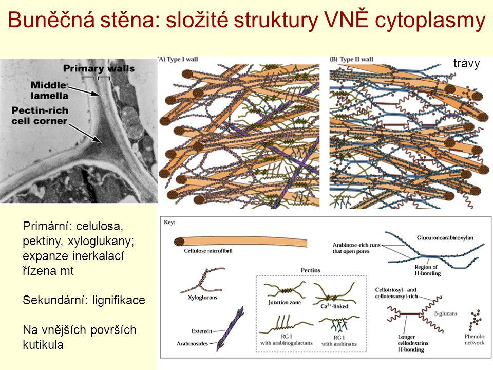 Buněčná stěna: složité struktury VNĚ cytoplasmy
