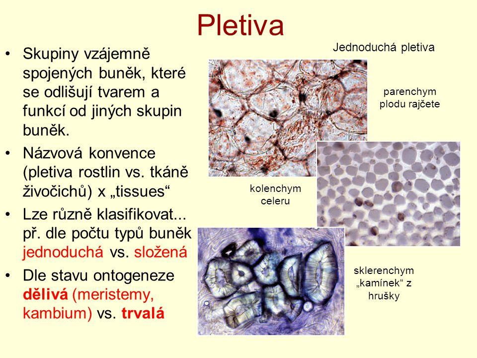 Pletiva Jednoduchá pletiva. Skupiny vzájemně spojených buněk, které se odlišují tvarem a funkcí od jiných skupin buněk.