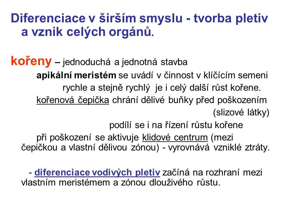 Diferenciace v širším smyslu - tvorba pletiv a vznik celých orgánů.