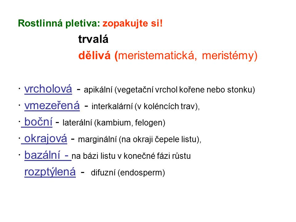dělivá (meristematická, meristémy)