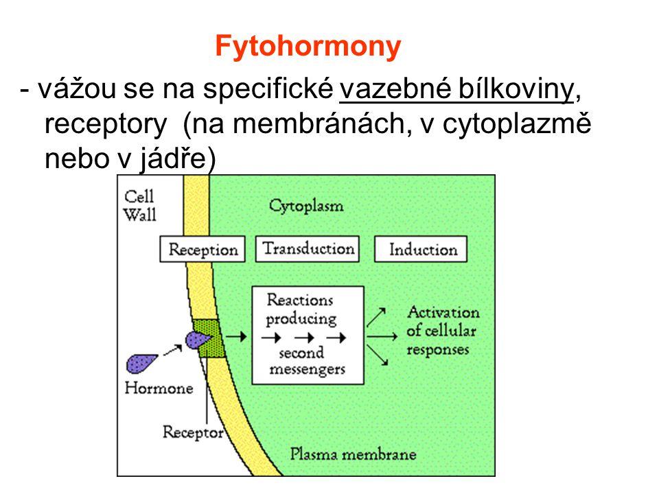 Fytohormony - vážou se na specifické vazebné bílkoviny, receptory (na membránách, v cytoplazmě nebo v jádře)