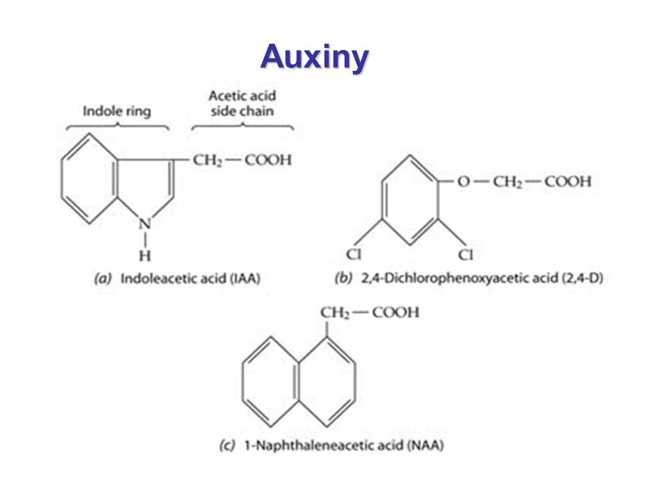 Auxiny