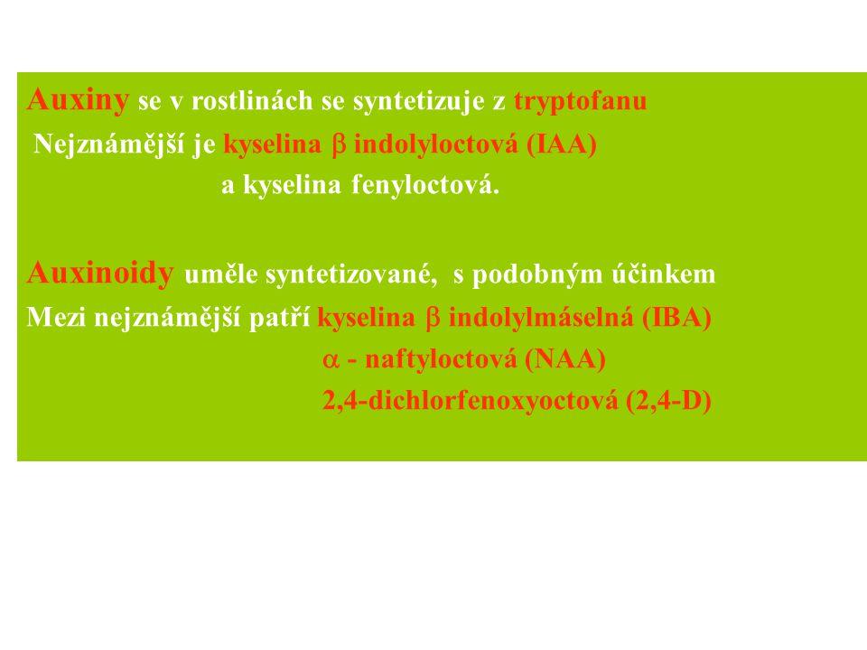 Auxiny se v rostlinách se syntetizuje z tryptofanu