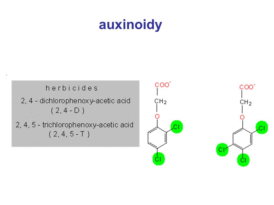 auxinoidy
