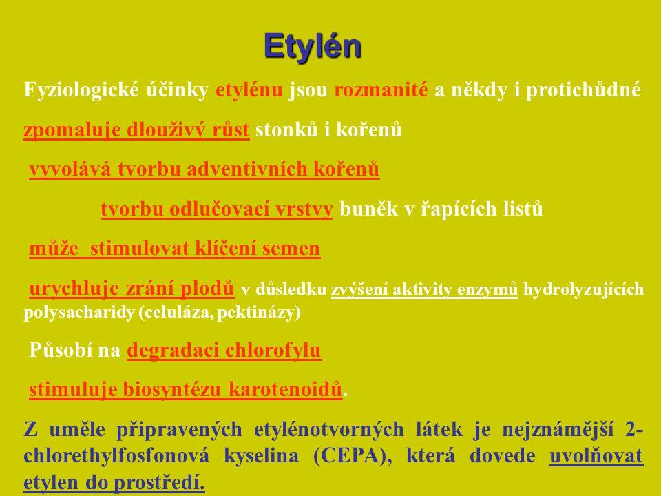 Etylén Fyziologické účinky etylénu jsou rozmanité a někdy i protichůdné. zpomaluje dlouživý růst stonků i kořenů.