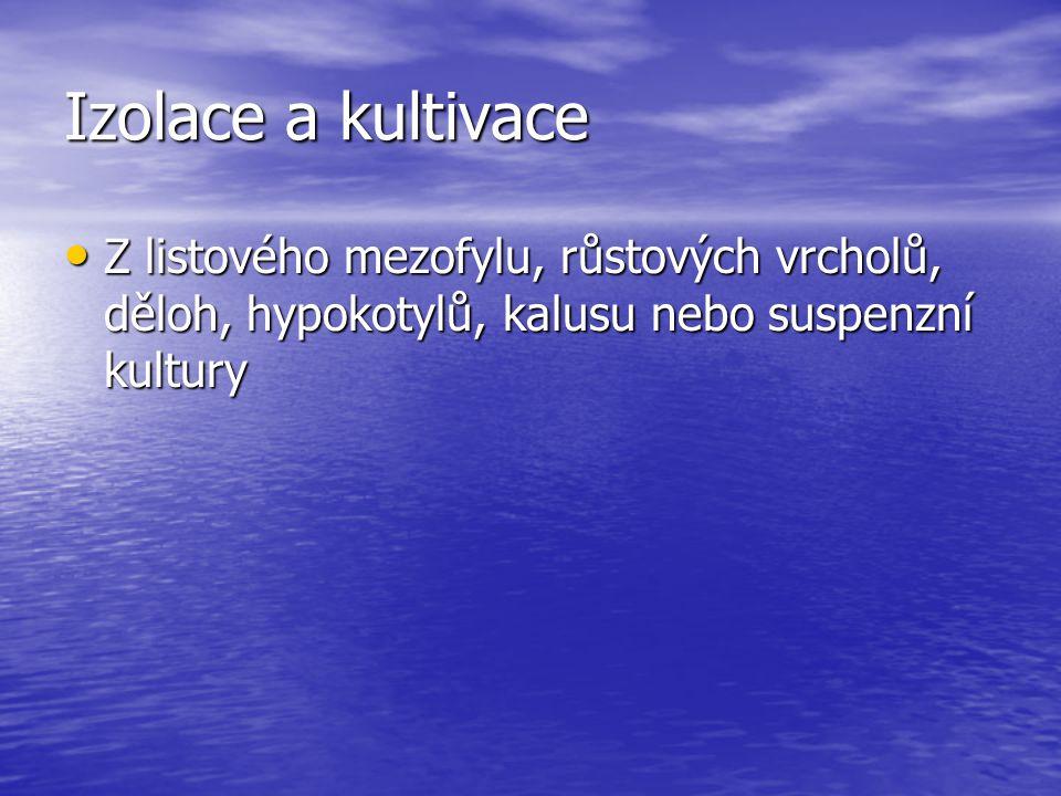 Izolace a kultivace Z listového mezofylu, růstových vrcholů, děloh, hypokotylů, kalusu nebo suspenzní kultury.
