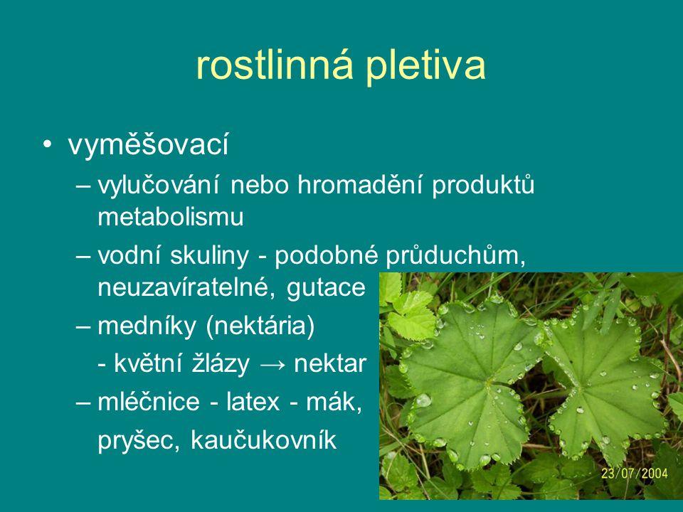 rostlinná pletiva vyměšovací