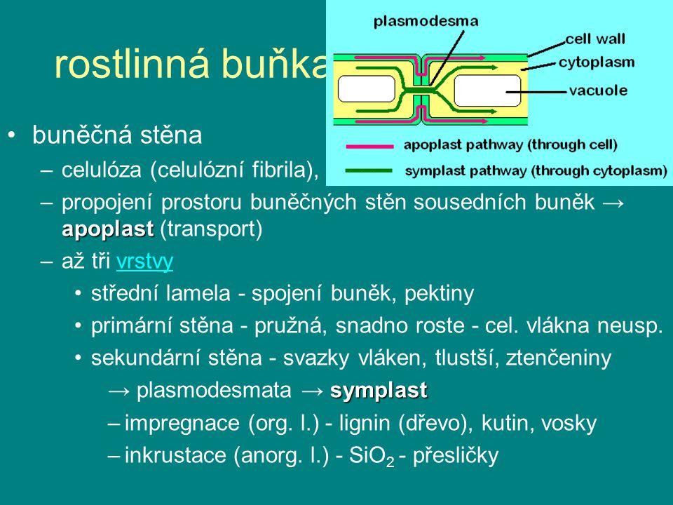 rostlinná buňka - něco nového: