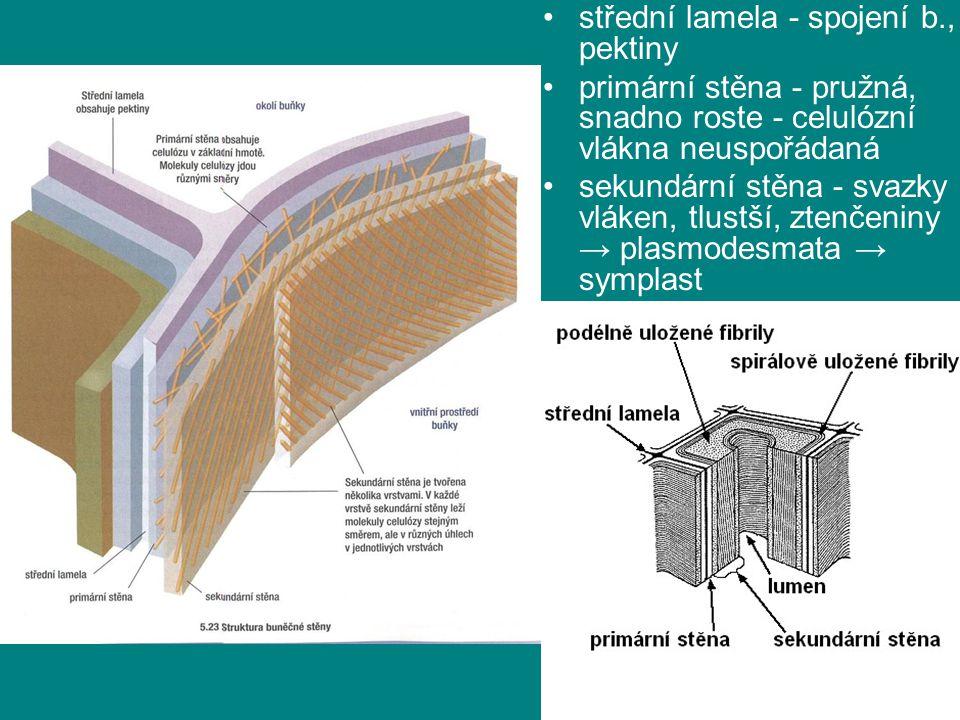 střední lamela - spojení b., pektiny
