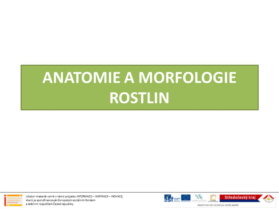 ANATOMIE A MORFOLOGIE ROSTLIN