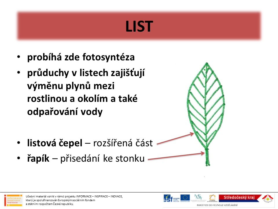 LIST probíhá zde fotosyntéza