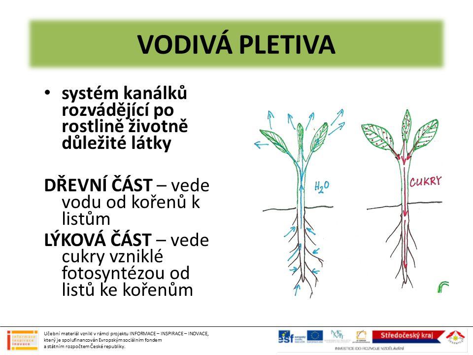 VODIVÁ PLETIVA systém kanálků rozvádějící po rostlině životně důležité látky. DŘEVNÍ ČÁST – vede vodu od kořenů k listům.