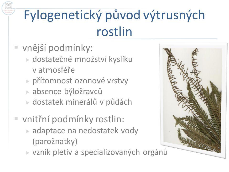 Fylogenetický původ výtrusných rostlin